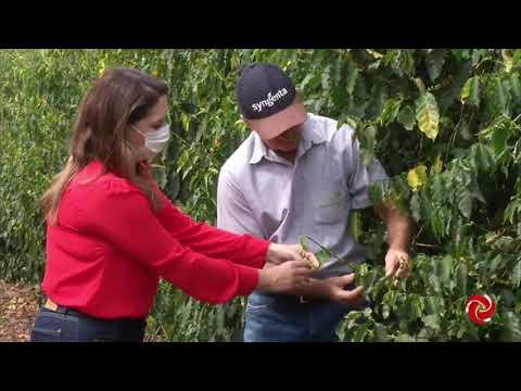 Bicho mineiro: como controlar a praga